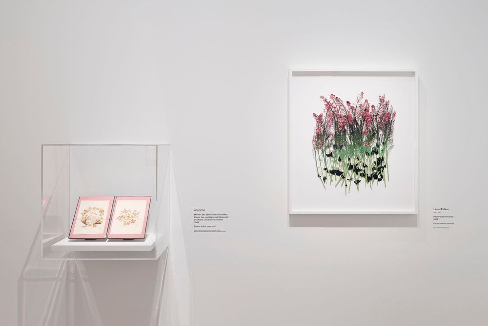 Artist:Lionel ESTÈVE, Exhibition:Jardins