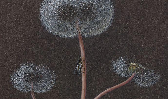 Future Herbarium