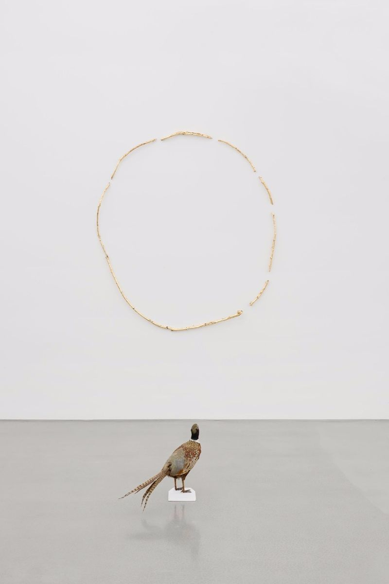 """Sección aurea,"" 2017, taxidermied pheasant, branches, gold leaf, 147.3 x 134.6 x 177.8 cm (58 x 53 x 70 inches)"