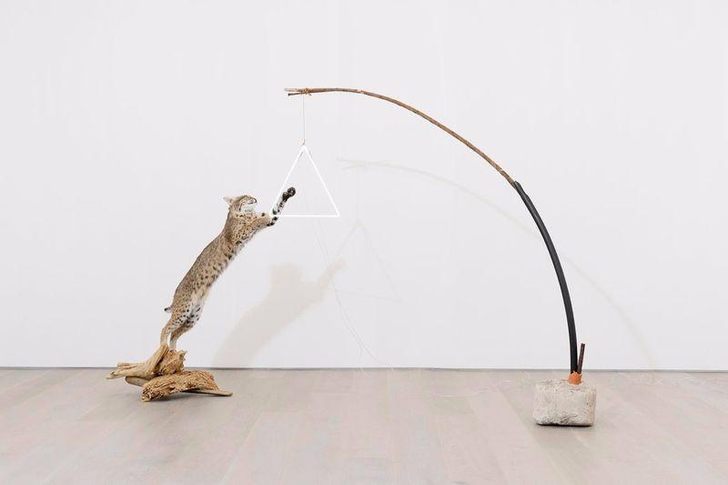 """""""Multis utile bellum,"""" 2017, bobcat, branch, neon, plastic, concrete, 179.7 x 311.2 x 45.7 cm, 70 3/4 x 122 1/2 x 18 1/4 inches"""