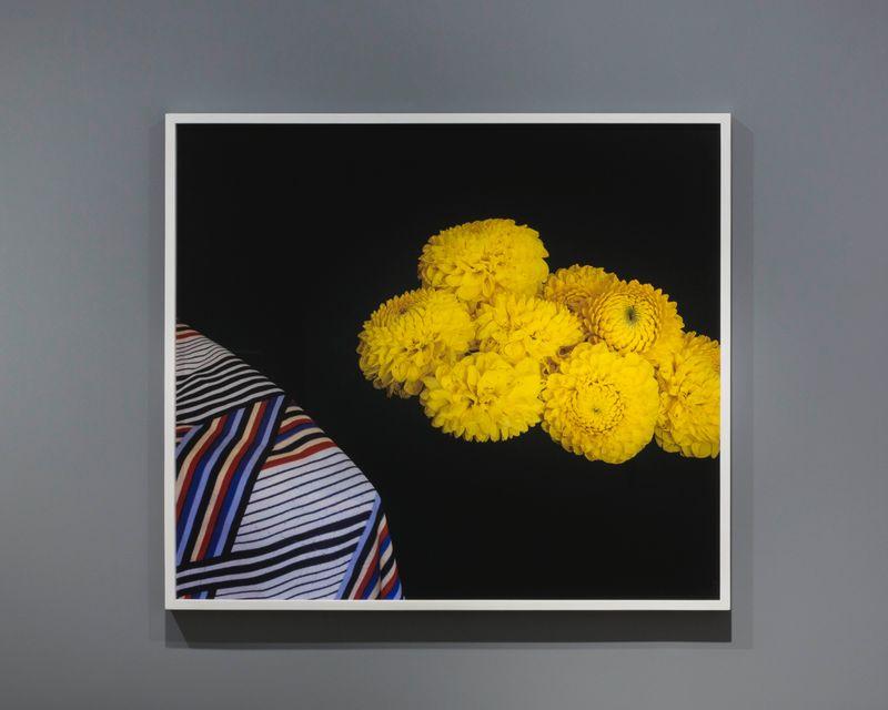 Leslie Hewitt, Scan Scan, 2018, digital chromogenic print, 76.2 x 101.6 cm (30 x 40 inches)