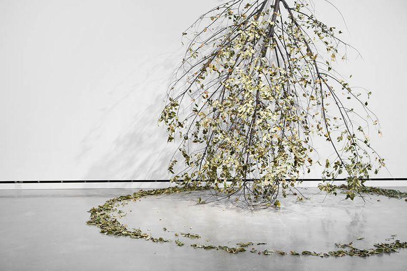 """View of the exhibition """"It Might as Well be Spring"""" at Rochester Art Center, Rochester (U.S.A.), 2014-2015""""Forst"""", 2014/ Trees, engines, steel construction / dimensions variable"""