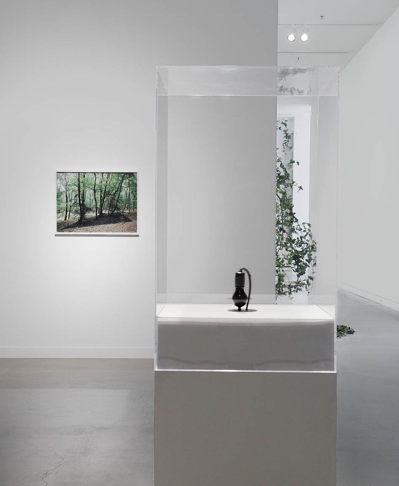 "View of the exhibition ""It Might as Well be Spring"" at Rochester Art Center, Rochester (U.S.A.), 2014-2015"