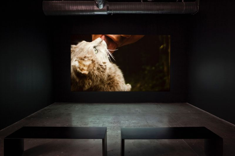"""View of the exhibition"""" Intersections (after Lautréamont)"""" at CIFO Foundation Miami (USA), 2015  """"Fructose"""", 2015 /  Video / Duration : 00:21:27"""