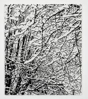 SNOW FOREST 006A | 法赫德·莫希禮