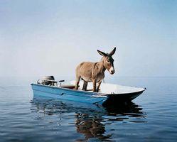 Untitled (donkey) | 波拉·彼薇