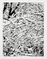 SNOW FOREST 004A | Farhad MOSHIRI