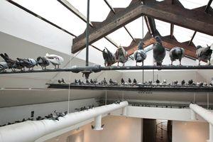 "Vue de l'exposition de groupe ""ILLUMInazioni"" curated by Bice Curiger  à 54th Venice Biennial  (Italy), 2011 | Maurizio CATTELAN"
